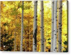 Fall's Visitation Acrylic Print