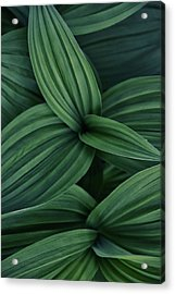 Acrylic Print featuring the photograph False Hellebore Plant Abstract by Nathan Bush