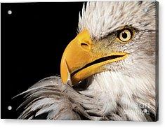 Feather Preening Acrylic Print