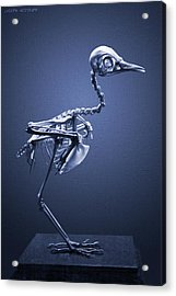 Featherless In Blue Acrylic Print