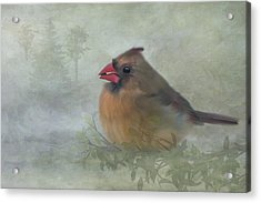 Acrylic Print featuring the photograph Female Cardinal With Seed by Patti Deters
