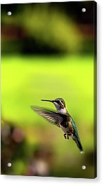 Acrylic Print featuring the photograph Female Ruby Wings Forward by Onyonet  Photo Studios