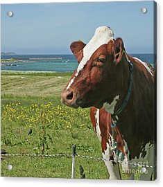 Acrylic Print featuring the photograph Fenced In by PJ Boylan
