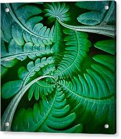Fern Dance Acrylic Print