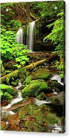 Fern Falls Panoramic Acrylic Print