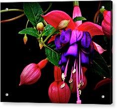 Festive Fuschia Acrylic Print