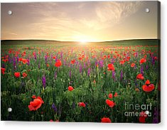 Field With Grass, Violet Flowers And Acrylic Print