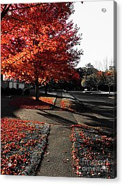Fiery Fall Trees, Part 2 Acrylic Print by JMerrickMedia
