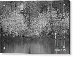 Acrylic Print featuring the photograph Filter Series 200b by Jeni Gray