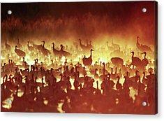 Fire Mist Sans Flight Acrylic Print