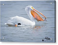 Fish Tail Acrylic Print