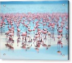 Flamingoes Acrylic Print by Grant Faint