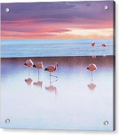 Flamingoes In Bolivia Acrylic Print by Ingram Publishing
