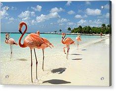 Flamingos On The Beach Acrylic Print by Vanwyckexpress
