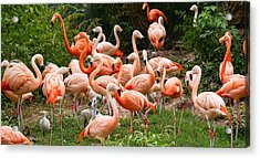Acrylic Print featuring the photograph Flamingos Outdoors by Top Wallpapers