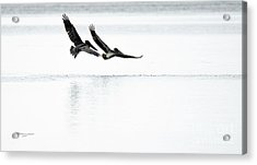 Flight Maneuvers Acrylic Print