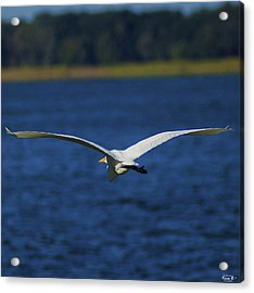 Flight Of The Egret Acrylic Print