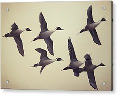 Acrylic Print featuring the painting Flight by Peter Mathios