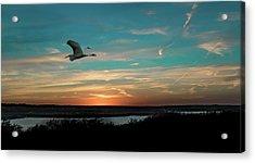 Flight To The Lake Acrylic Print