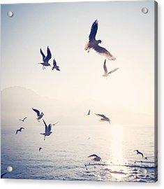 Flock Of Birds Flying Over Sea On Sunny Acrylic Print by Toni Barth / Eyeem