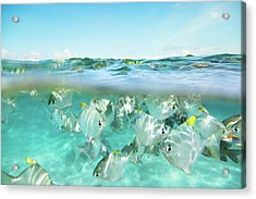 Flock Of Fish Under And Above Water Acrylic Print by Danilovi