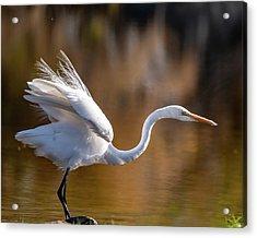 Floofy Egret Acrylic Print