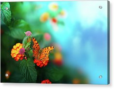 Flower Background With Butterfly Acrylic Print by O-che