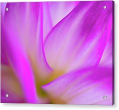 Flower Close Up Acrylic Print