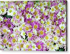 Flower Patterns Collection Set 10 Acrylic Print