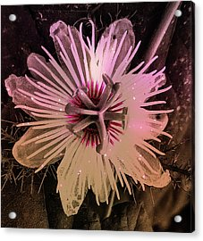 Flower With Tentacles Acrylic Print