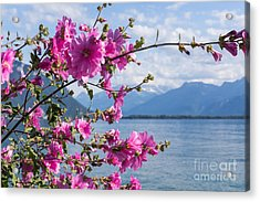 Flowers Against Mountains And Lake Acrylic Print