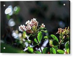 Beautiful Blooms Acrylic Print