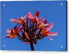 Flowers In Clear Blue Sky Acrylic Print