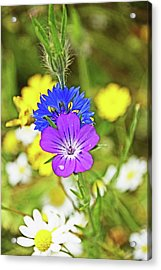 Flowers In The Meadow. Acrylic Print