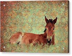 Flowery Foal Acrylic Print