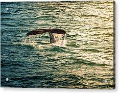 Fluke Wave Acrylic Print