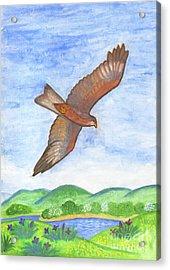 Flying Hawk Acrylic Print