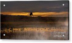 Flying Over Crane Pond Acrylic Print