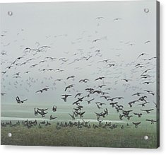 Acrylic Print featuring the painting Foggy Arrival by Peter Mathios