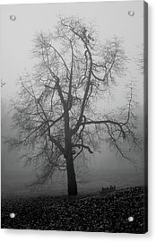 Foggy Tree In Black And White Acrylic Print