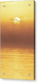 Foggy Wetlands Sunrise Acrylic Print