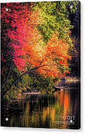 Foliage Over Forge Pond Acrylic Print