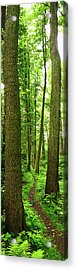Footpath Between The Trees Acrylic Print by Tomchat