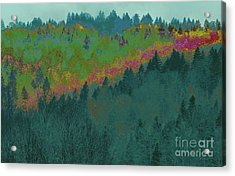 Forest And Valley Acrylic Print