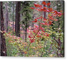 Forest Autumn Acrylic Print by Leland D Howard