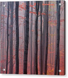 Forest Barcode Acrylic Print