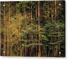 Forest Dogwood Acrylic Print