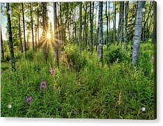 Acrylic Print featuring the photograph Forest Growth Alaska by Nathan Bush