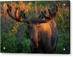 Forest King Sunrise Acrylic Print