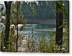 Forest Lake In Amendoa Acrylic Print
